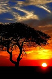 A Beautiful Sunset on the African Plains