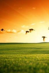 A Field of Grass and Flying Birds at Sunset