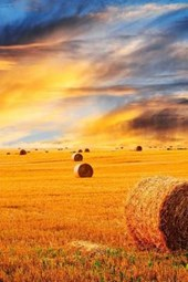 A Golden Sunset Over a Hay Field