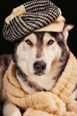 A Well Dressed Husky, for the Love of Dogs | Unique Journal |