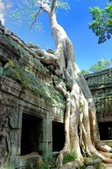 Ta Prohm Temple Angkor Wat Cambodia Journal | Cool Image |