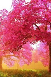 Striking Trees with Pink Leaves