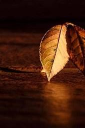 Autumn Leaf on a Table