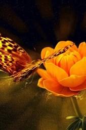 Butterflies and an Orange Flower
