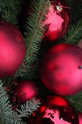 Red Christmas Ornaments on Fir Boughs