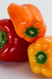 Delicious Bell Pepper Harvest, for the Love of Food