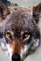 Website Password Organizer a Wolf Looking Straight at Me | Unique Journal |