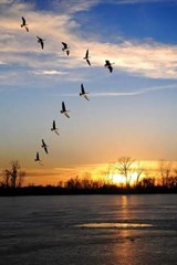 Canadian Geese Flying in V Formation Journal | Cool Image |