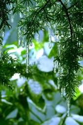 Fir Tree Icicles Journal
