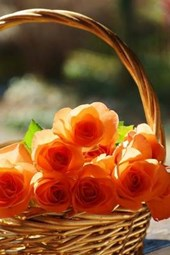 Orange Roses in a Basket, for the Love of Flowers