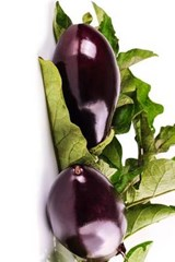 Delicious Eggplant Harvest, for the Love of Food | Unique Journal |