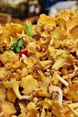 Delicious Real Chanterelles Mushrooms, for the Love of Food | Unique Journal |