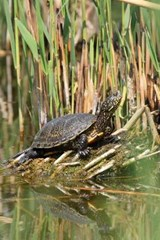 Pond Terrapin Journal | Cool Image |