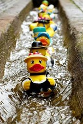Rubber Ducks on Street Patrol