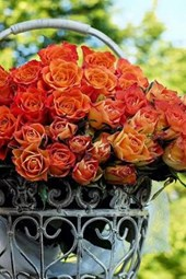 Fresh Cut Pink and Orange Roses in a Steel Basket