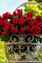Fresh Cut Red Roses in a Steel Basket
