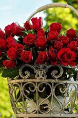 Fresh Cut Red Roses in a Steel Basket | Unique Journal |