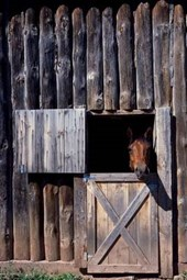 A Horse Peeking Out of the Stable