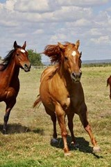 Horses on the Run in the Pasture | Unique Journal |