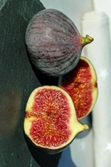 Freshly Halved Figs, for the Love of Food | Unique Journal |