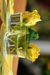 Fresh Cut Yellow Roses in Two Glasses