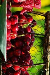 Fresh Cherry Jam, for the Love of Food | Unique Journal |