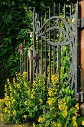 Yellow Flowers Growing in Front of a Wrought Iron Gate