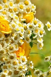 A Beautiful Bouquet of Yellow Roses and White Flowers