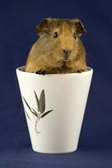 Guinea Pig in a Cup Journal | Cool Image |