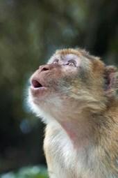 The Amazed Monkey Journal