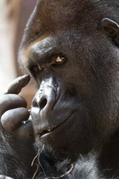 The Thinking Gorilla Journal