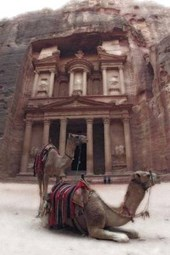 Camels at Petra Jordan Journal