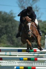 Horse Jumping Sport Journal | Cool Image |