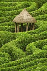 Hut in a Hedge Maze Journal | Cool Image |