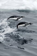 Jumping Penguins Journal | Cool Image |