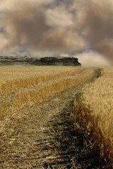 Wheat Field Journal | Cool Image |