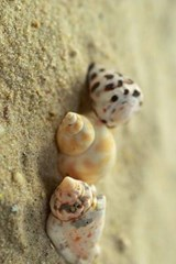 What to Do with the Three Sea Shells | Unique Journal |