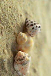 What to Do with the Three Sea Shells