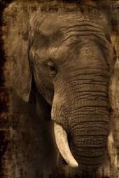 Website Password Organizer African Elephant in Kenya