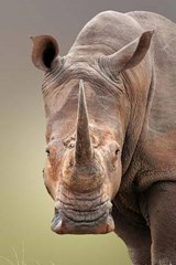White Rhinoceros Journal | Cool Image |