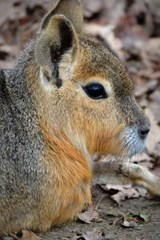 Website Password Organizer Patagonian Mara Hare Profile | Unique Journal |