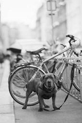 Organic Anti Theft Bike Lock in the City