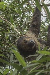 A Sloth Hanging Out in a Tree, for the Love of Animals