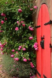 A Red Door and Pink Garden Roses