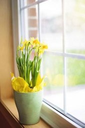 Daffodils in a Vase by the Window in Spring, for the Love of Flowers
