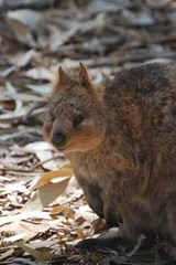 Website Password Organizer Quokka in Australia | Unique Journal |