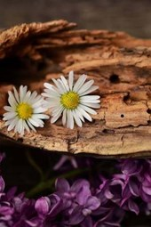 White and Purple Flowers on a Fallen Log in the Woods