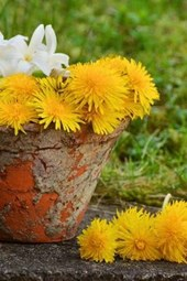 Yellow and White Flowers in a Terra Cotta Pot