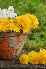 Yellow and White Flowers in a Terra Cotta Pot | Unique Journal |