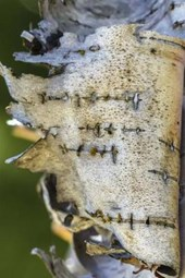 Birch Tree Bark Peeling Off